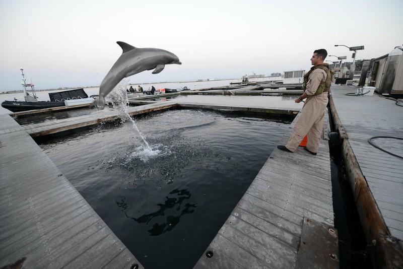 Ảnh vệ tinh: Triều Tiên huấn luyện cá heo cảm tử phục vụ quân sự