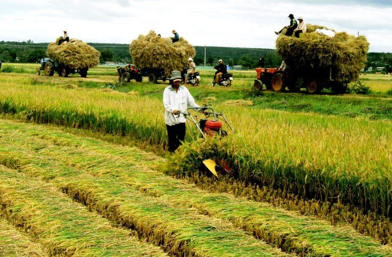 ứng dụng ảnh viễn thám trong quản lý nông nghiệp